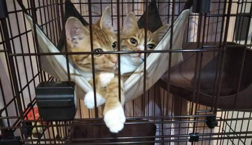 保護猫活動される素敵な社長さん